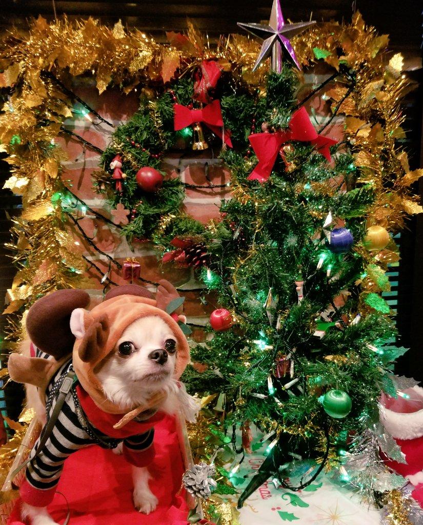 お休みだったのでこーじとクリスマスデートしてきました♡