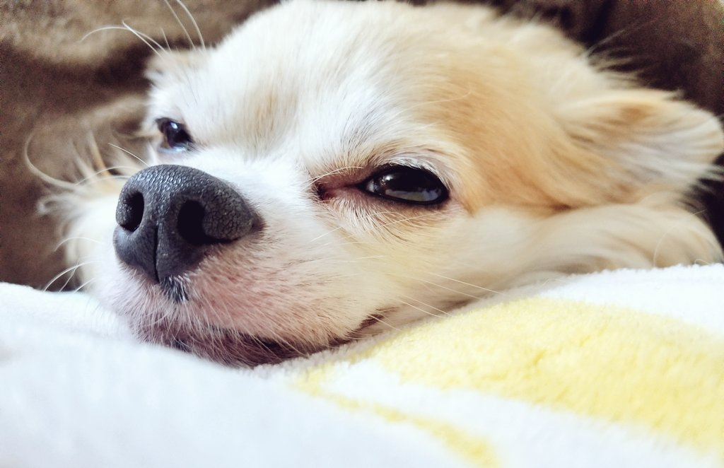 疲れた時はもふもふに癒やされて…(*´ω`*)