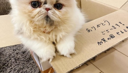 猫さんが家族になりました!!!
